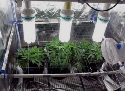 Освещение для выращивания канабиса 60